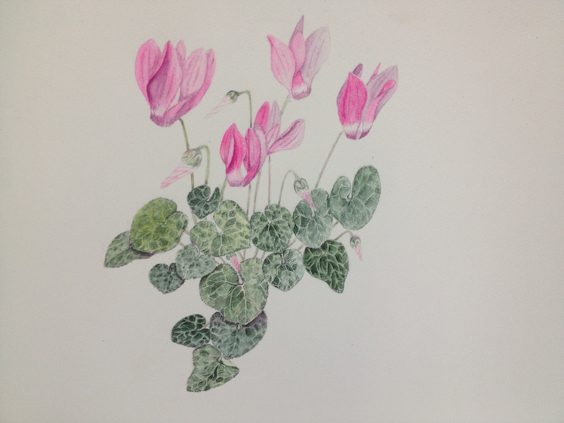 Higham Hall Botanical Watercolour Painting Spring Flowers
